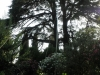 L\'antenne parait petite au milieu de ces beaux arbres